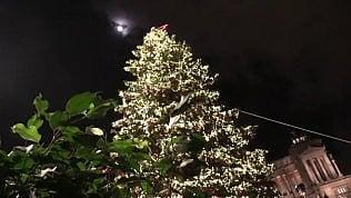 """L'accensione di Spelacchio, """"l'albero più famoso del mondo"""""""