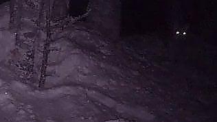 Mettono videocamera nel bosco: ecco cosa riescono a riprendere
