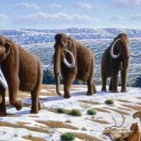 Il mammut viveva circa 60 anni, l'uomo di Neanderthal solo 38