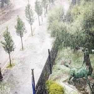 Il Cavallo di Viale Mazzini