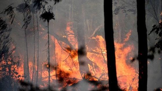 Australia: fiamme alte 70 metri, incendi fuori controllo con un caldo record di oltre 50 gradi