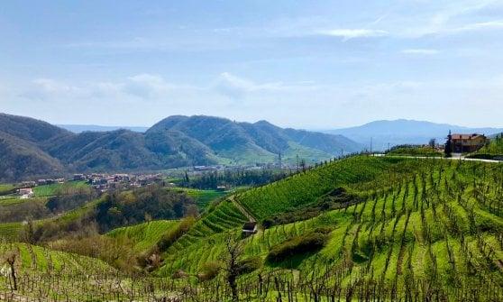 Nelle terre del Prosecco, da quest'anno Patrimonio Mondiale Unesco