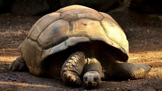 Che memoria portentosa quelle tartarughe giganti