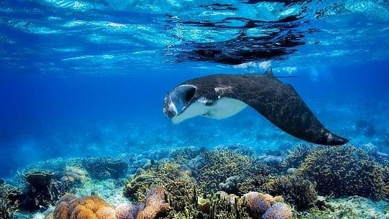 """Palau vieta le creme solari. """"Uccidono i  nostri coralli"""""""