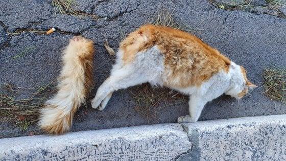 Brindisi, gatto seviziato a morte coi petardi: le foto shock nella protesta di un'animalista
