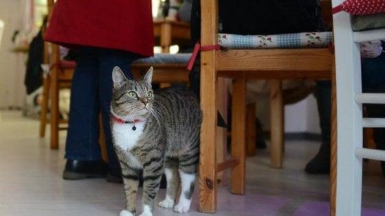 Cani e gatti al ristorante, l'ultima parola spetta al gestore
