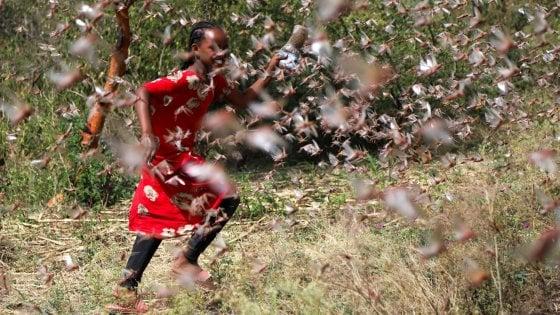 Le locuste invadono il Corno d'Africa. A rischio agricoltura e traffico aereo