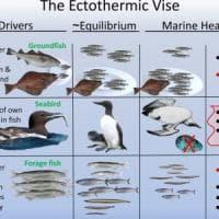"""Il """"blob"""" legato alla crisi climatica ha ucciso un milione di uccelli marini"""