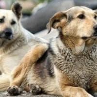 Cani randagi e non addestrati capiscono i comandi dell'uomo