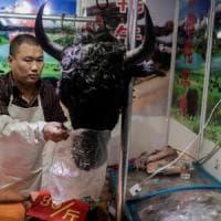 "Virus Cina, la donna ricoverata a Bari è affetta da micoplasma. Oms: ""Non è emergenza..."