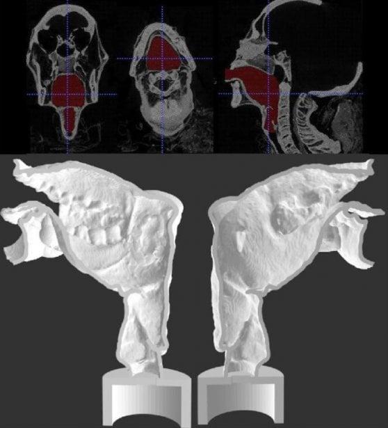 Ricostruita la voce di una mummia di 3 mila anni