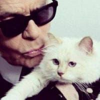 Choupette, la gatta di Lagerfeld, scompare dai social. Fan preoccupati. Ma potrebbe...