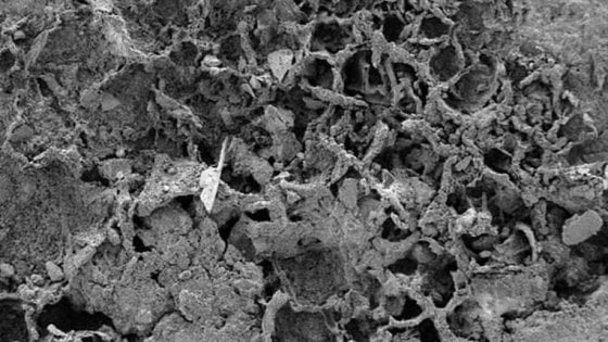Quel fungo ha 810 milioni di anni, è il più antico del mondo
