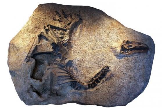 Confermato: è un allosauro tutto nuovo quello dello Utah