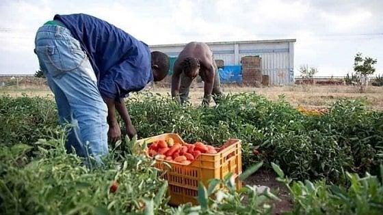 L'Onu accusa: in Italia l'industria alimentare sfrutta i braccianti
