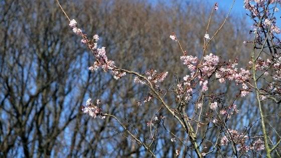 """Natura in tilt con la finta primavera. """"Insetti e gelate improvvise minacciano i campi"""""""