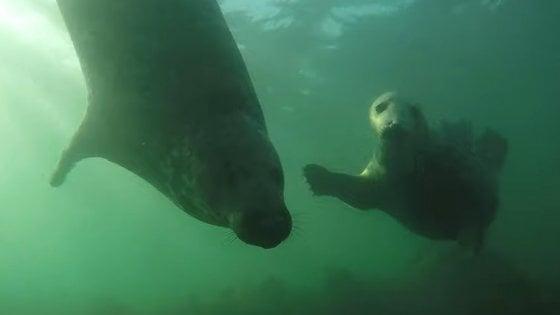"""""""Così le foche battono le pinne nella stagione dell'amore"""""""