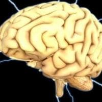Il cervello addestra il sistema immunitario fin dall'embrione