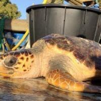 Cento euro a chi salva tartarughe: il premio ai pescatori in Puglia