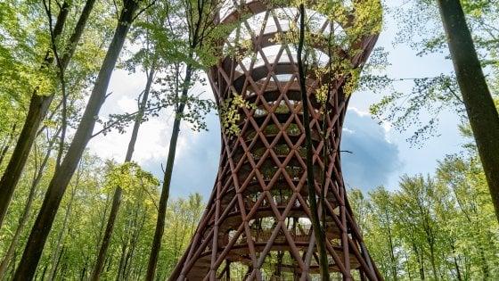 Danimarca. Una torre con vista sulla foresta della Selandia