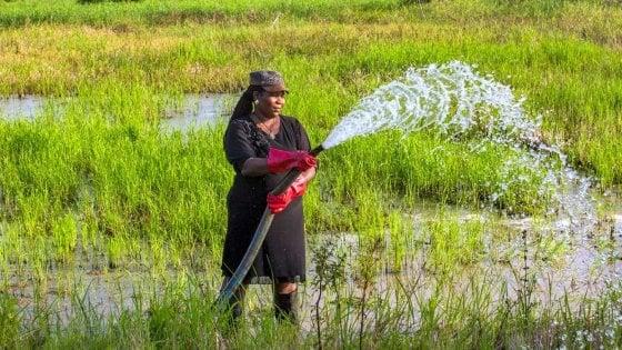 Lotta ai cambiamenti climatici per combattere la fame. L'appello dell'Ifad per i progetti agricoli del prossimo decennio