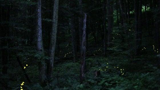 Biodiversità, niente più lucciole nelle notti estive