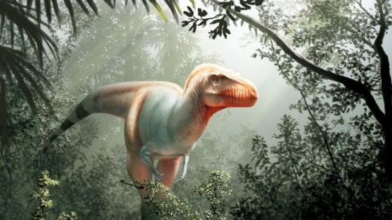 Scoperto il cugino del T.rex, un dinosauro che non lasciava scampo
