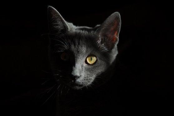 Festa nazionale del gatto: Felix non ha sette vite e non vede al buio. I falsi miti da sfatare