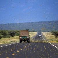 Invasione delle locuste: allarme Fao sul pericolo carestia in Africa orientale