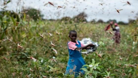 L'invasione delle locuste in Africa: le foto dell'emergenza