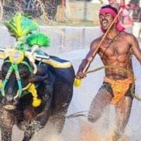 India, Srinivas Gowda: il giovane operaio che corre con i bufali veloce come Bolt