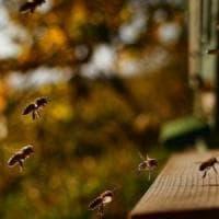 Così comunicano le api. Svelati oltre 1.500 movimenti unici