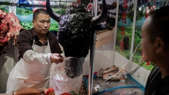Coronavirus, la Cina mette al bando la carne di animali selvatici