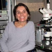 """Università di Cagliari, premiata la ricerca sulla cannabis. La studiosa: """"Ma il divieto..."""