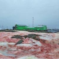 """L'Antartide si tinge di rosso: colpa di un'alga. """"Peggiora lo scioglimento dei ghiacci"""""""