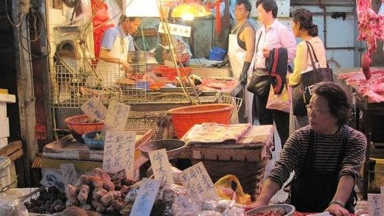 Coronavirus, Cina regola consumo carne di animali selvatici e esotici. A Shenzhen vietato mangiare cani e gatti