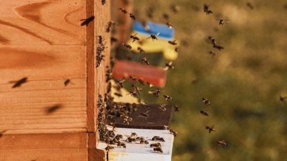 Le api sono il termometro della salute dell'ambiente