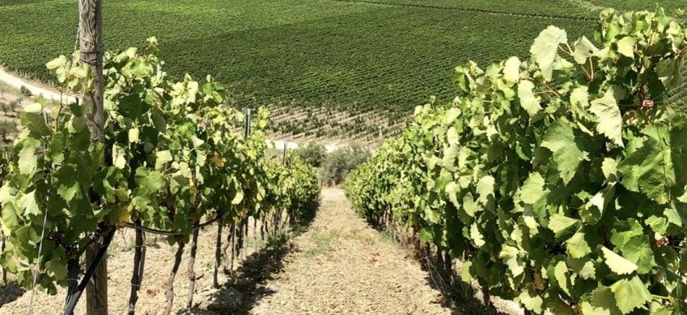 Le nuove rotte del Gaglioppo: dieci vini da tenere in cantina
