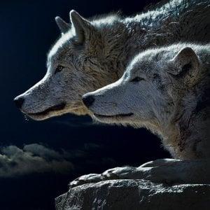 Lupo buono e lupo cattivo: come fare e ricevere informazione al tempo del Coronavirus