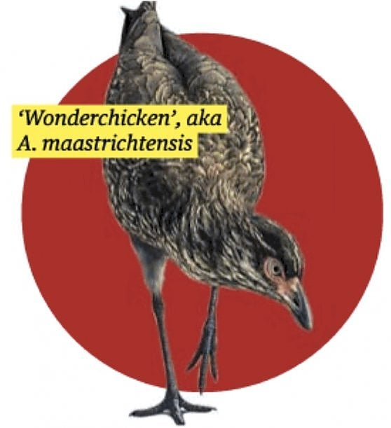 Scoperto in Belgio il fossile del Wonderchicken, è la prova più antica di uccello moderno