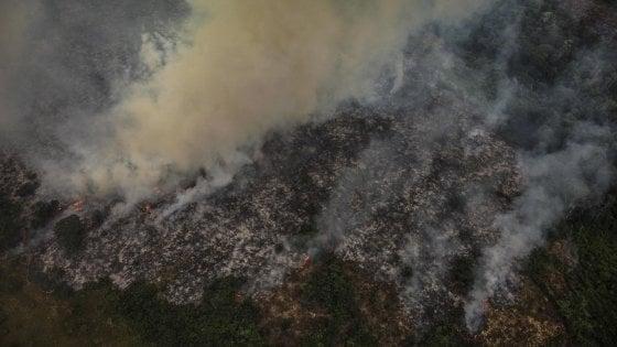 """""""Non si azzerano le emissioni con le piantagioni"""", Greenpeace contro la deforestazione"""