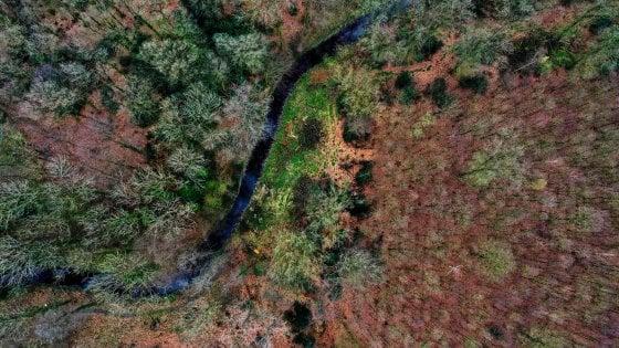 Perché le nostre foreste sono troppo preziose per andare perdute