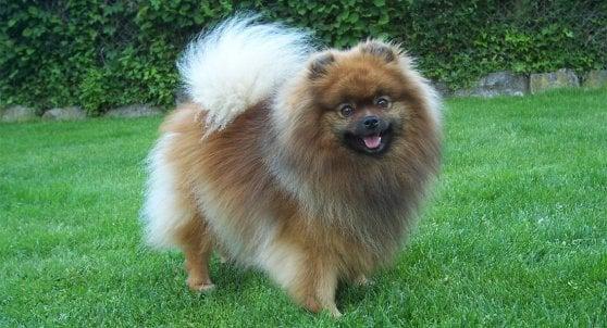 I cani erano vissuti come animali domestici già duemila anni fa