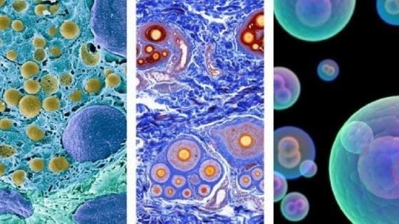 Sempre più vicino l'Atlante delle cellule umane. Eccone altre 500 mila
