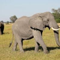 Botswana, chiuse le frontiere per fermare il Covid-19
