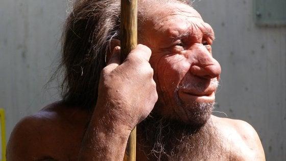 Molluschi, foche e pinoli: in una grotta il menu di Neanderthal