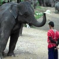 Coronavirus, chiusi i parchi in Thailandia. Dopo 44 anni stop agli show con elefanti. Non...
