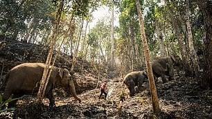 A rischio elefanti del turismo
