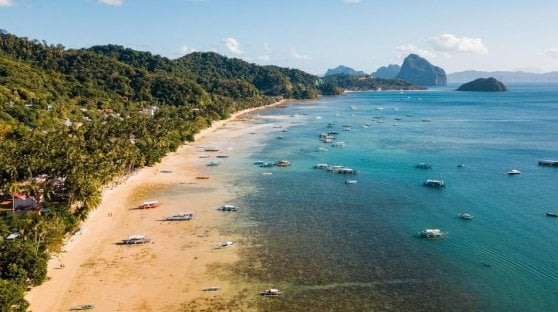 Coronavirus, nelle Filippine le meduse invadono le spiagge deserte