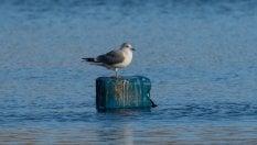 Plastica, il pericolo dipende anche dalla tagliadi SIMONE VALESINISpeciale Effetto Terra